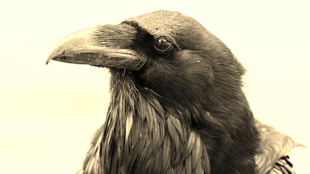 Cabraal l'aventureux (épisode 8) corbeau